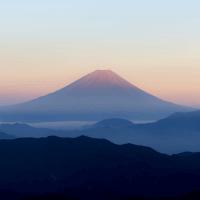 日本採用 駐在員募集