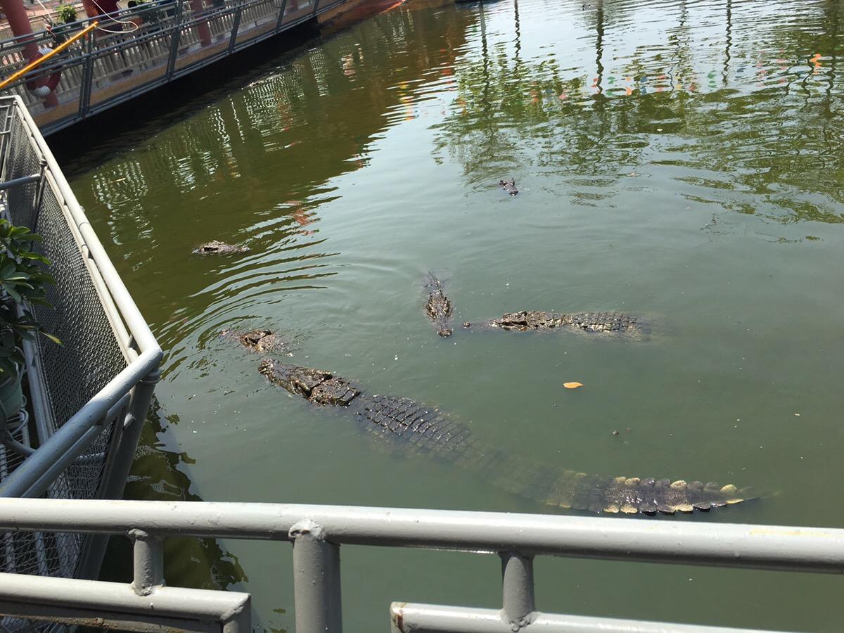 ベトナム ホーチミン スイティン公園 ワニ釣り