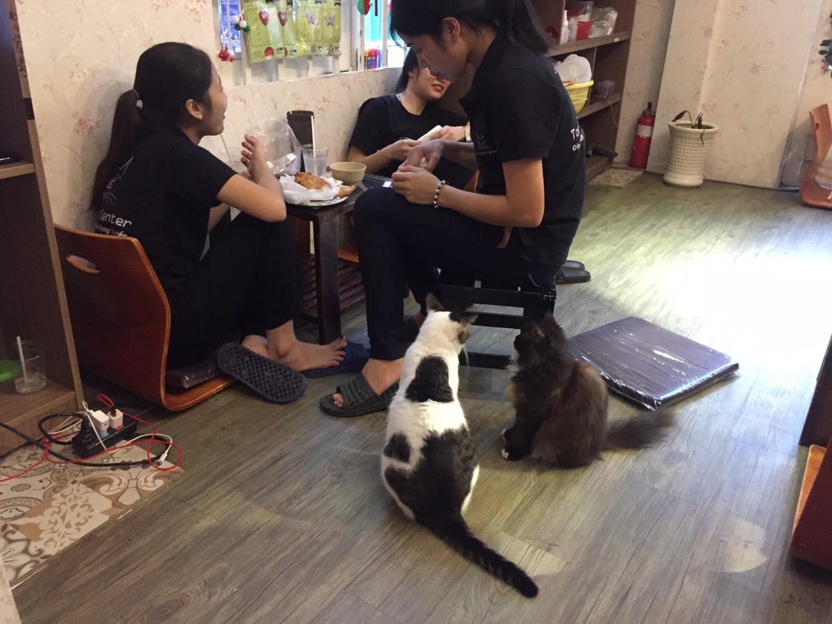 ベトナム ホーチミン 猫カフェ