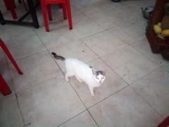 ダナン名物ばあちゃんのミー・クワン(Mì Quảng) ~看板猫もくつろぐBún Bà Hoàn~