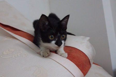 ベトナム ホーチミン 猫 ペット 飼育 生活