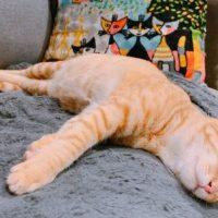 猫がいる幸せ。ベトナムでも猫とまったり暮らしたい、、第2弾!