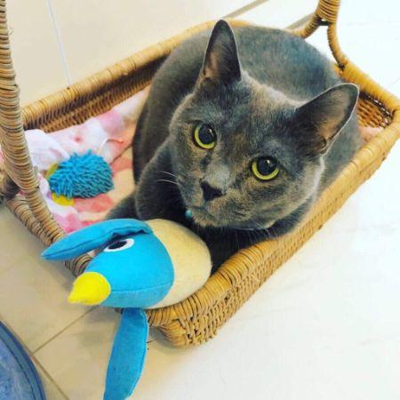 ベトナム ホーチミン 猫 ペット 飼育 生活 猫がいる幸せ