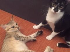 猫がいる幸せ。ベトナムでも猫とまったり過ごしたい、、