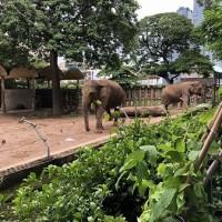 ホーチミン市民憩いの場、サイゴン動植物園!緑のオアシスや、ゆる~い動物イラストに癒されませんか?