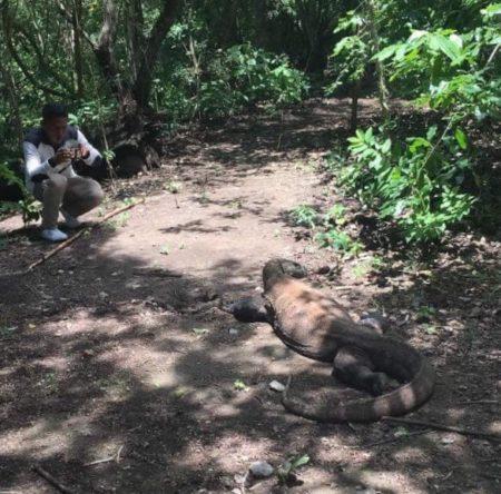 ベトナム ホーチミン インドネシア コモド島 コモドドラゴン ドラゴン遭遇
