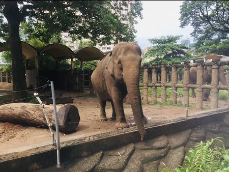 サイゴン動植物園のゾウ