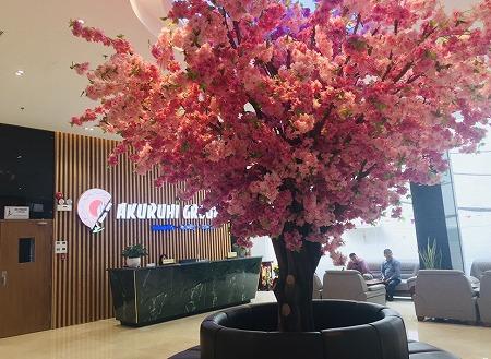 ホーチミンアクルヒスーパーの桜(造花)